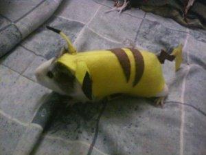 guinea pig pikachu