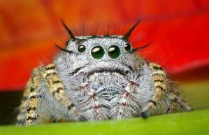 cute nervous spider