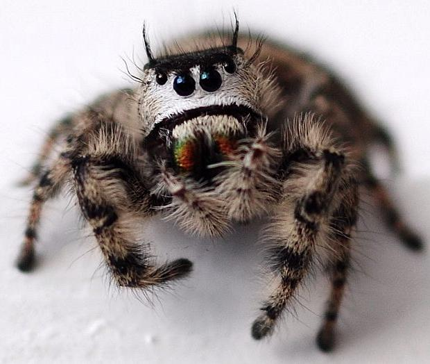 spiders cute spider angry jumping eyes eating face dog cutest happy really sad frowny exist fat pbh2 yes binge animal