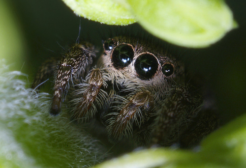 Spider hiding