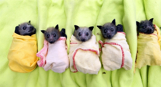 Cute Baby Bats in Pockets