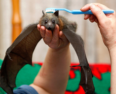 Cute Bat Massage