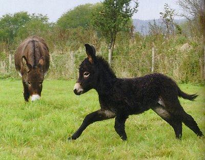 Baby Donkey alias Majestic Horse