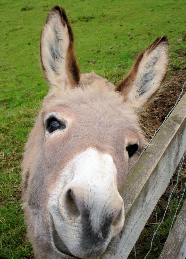 Cute Cuddly Donkey