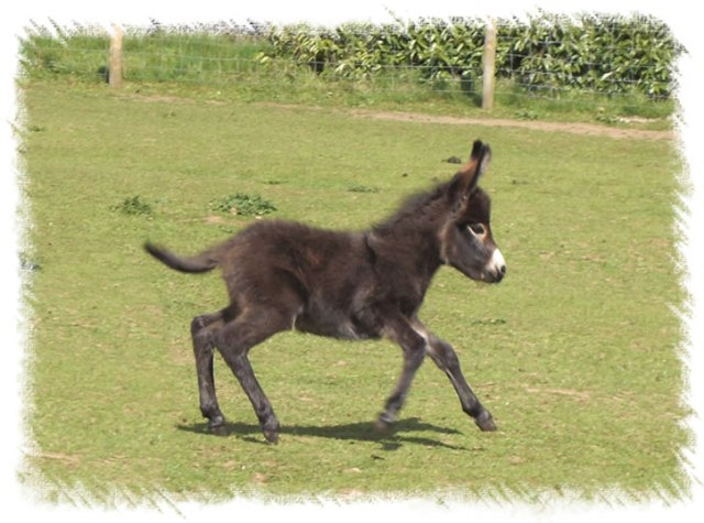 Cute Donkey Running
