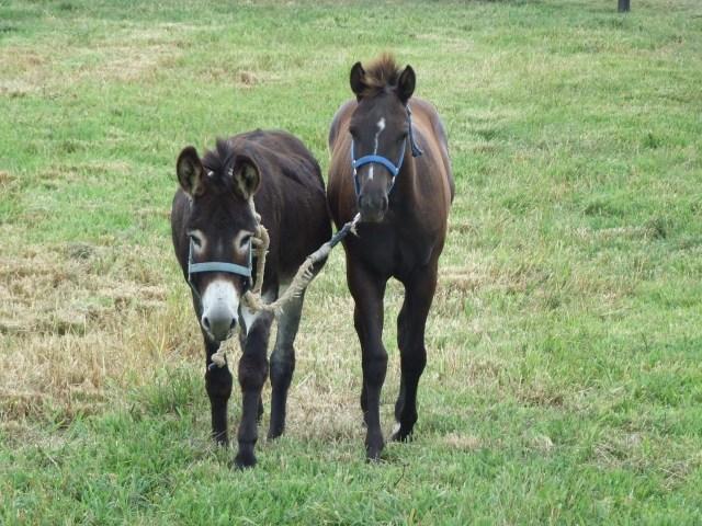 Donkey + Horse