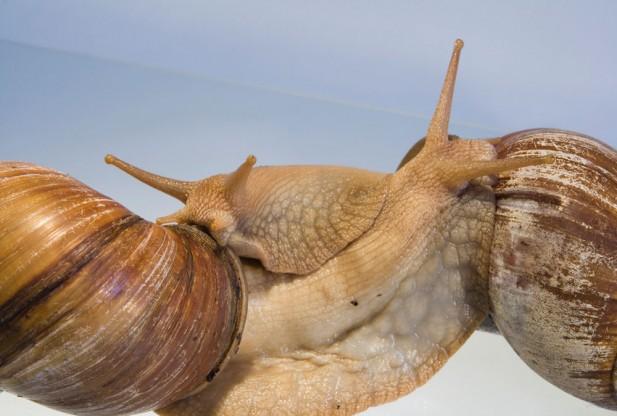 Cute snail hug
