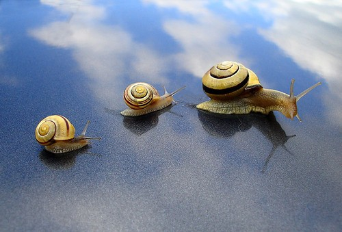 Cute Snail Family