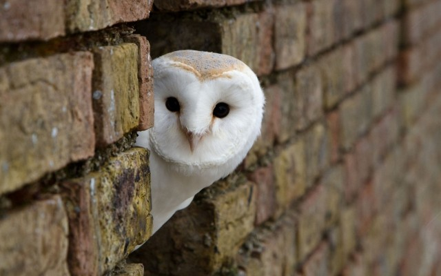Cute Delivery Owl