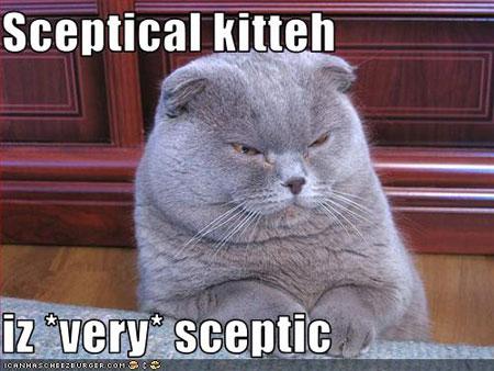 Sceptical Kitten